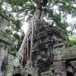 巨大な樹木と一体化したアンコール遺跡「タ・プローム」