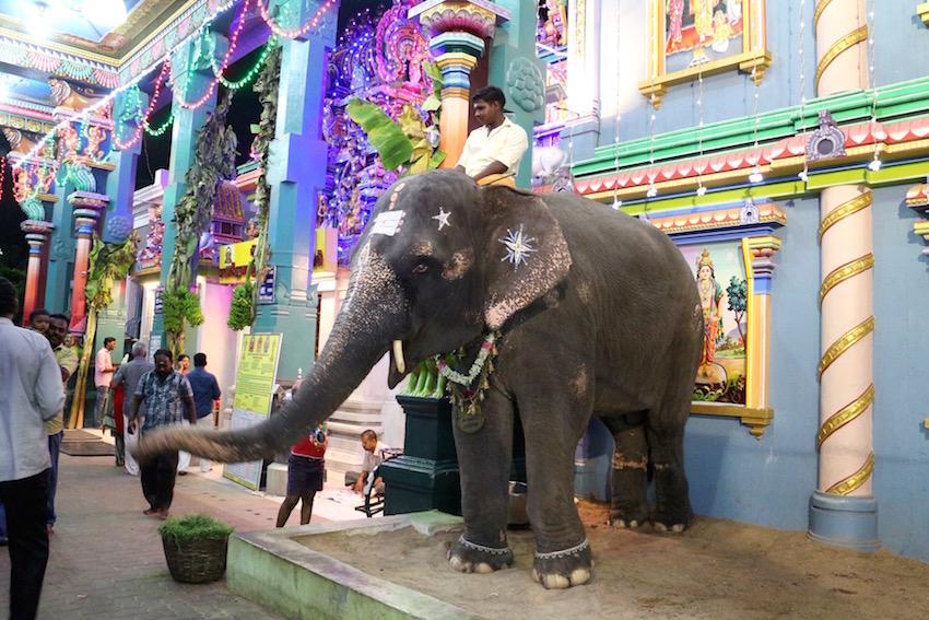 象にも会える!ガネーシャ寺院「Arulmigu Manakula Vinayagar Temple」